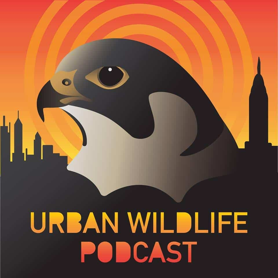 Logo for the Urban Wildlife Podcast depicts the head of a bird of prey and a cityscape against an orange bullseye background.