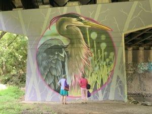Great-Blue-Heron-in-Tacony-Creek-park-300x225