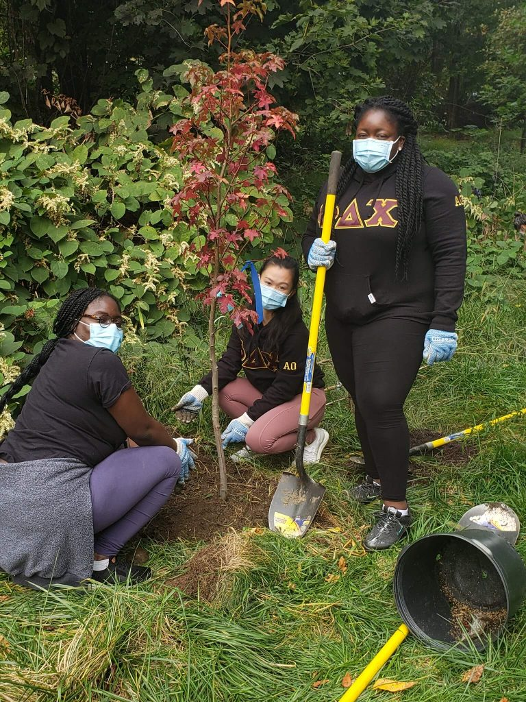 ttf watershed planting trees