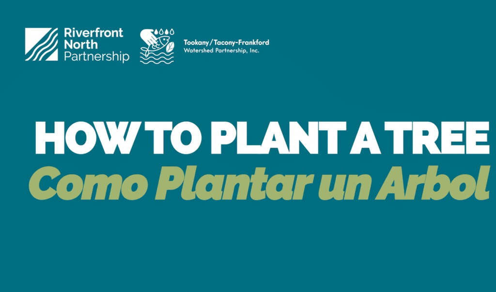 How to Plant a Tree video